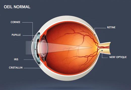 oeil-normal